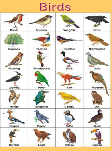 birds jpg 369 215 500 birds list names pinterest the o