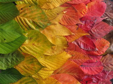 what causes the leaves to change color in the fall the science why leaves change color in autumn