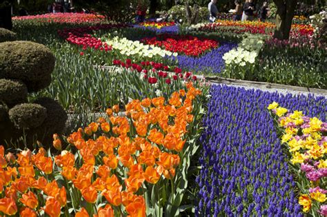 Roozengaarde Display Garden by Roozengaarde Display Garden Of Tulips Hyacinths And Daffodils