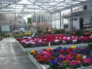 p 233 piniere jardinerie cambrai vente et livraison fleurs