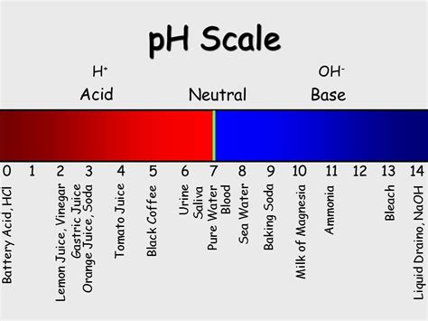 acid base ph scale acids and bases ppt video online download