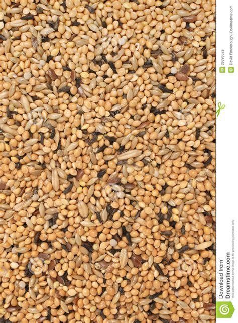 bird seed mix stock image image of meal detail birdseed