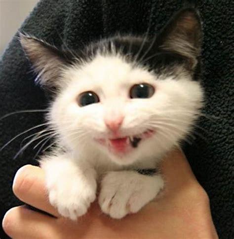 imagenes gatos alegres animales que no pueden dejar de sonre 237 r humor taringa