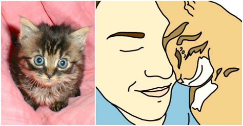 8 Ways Your Cat Shows It You by 10 Surprising And Beautiful Ways Your Cat Shows You