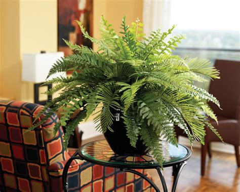 using plants in home decor samambaias na decora 231 227 o e porque n 227 o ideias designer