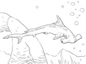 scalloped hammerhead shark coloring page free printable