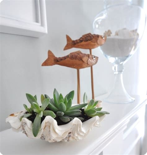 clam shell planter sea shell planter ideas to show your plants ideas