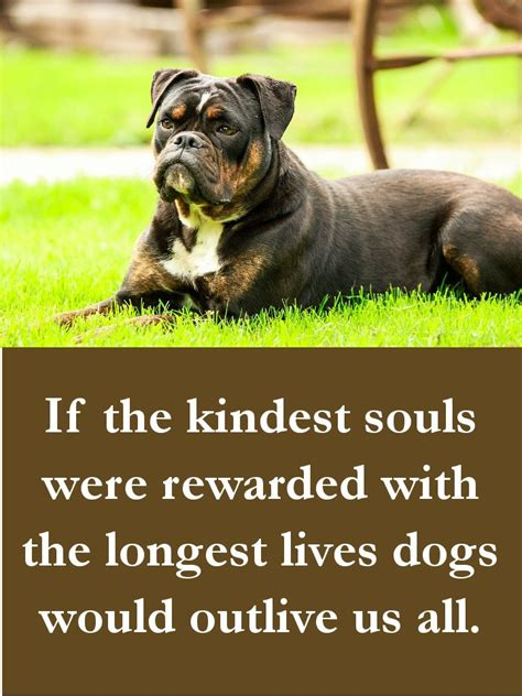 beautiful dog quotes  touching  poignant  funny