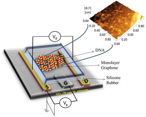 electron transistor graphene improving dna detecting transistors with graphene