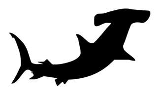 hammerhead shark silhouette 1000 images about silhouette on