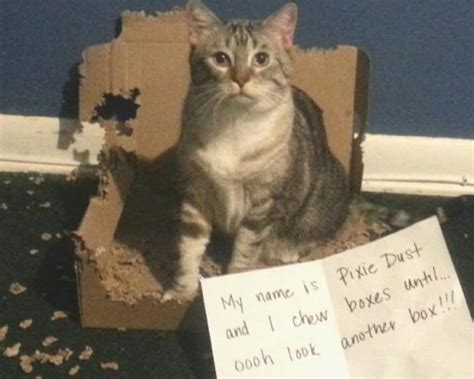 Best Cat Memes - best cat memes of all time image memes at relatably com