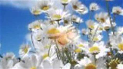 fiore di maggio lyrics fiore di maggio fabio concato con testo viyoutube