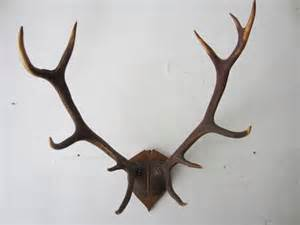 Country and chalet deer fallow deer roe deer antlers furniture