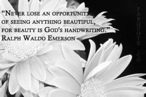 never lose an opportunity of seeing anything beautiful cute daisy quotes quotesgram