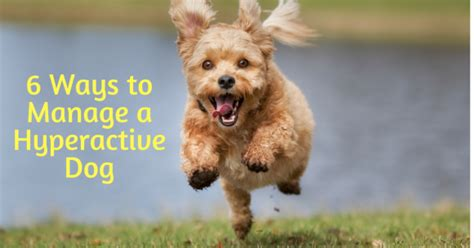 hyperactive puppy biting 6 ways to manage a hyperactive thedogtrainingsecret