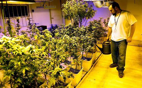 Colorado Pot Growers Struggle to Meet High Demand Modern Farmer