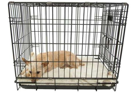 crate training a puppy with another dog in the house 6 tips on dog crate training for your dog