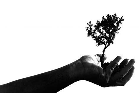 fotos de naturaleza en blanco y negro blog de fotograf 237 a imagen de naturaleza foto gratis