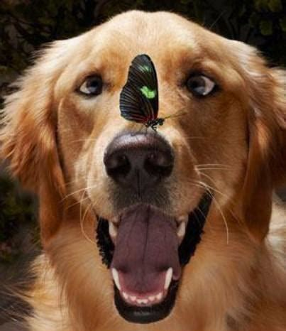 silly puppy dogs images with butterfly on his nose wallpaper and background photos