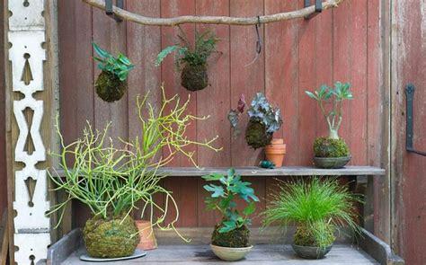 gardening trends  rise  kokedama telegraph