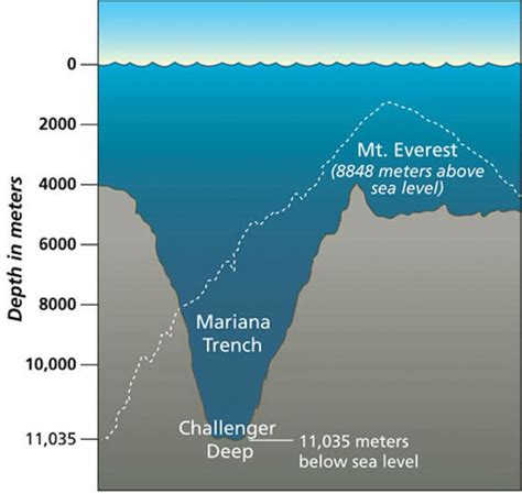 how polluted is the mariana trench youngzine