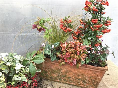 fiori da vaso invernali composizione in vaso di piante invernali sempreverdi