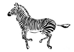 Zebra Print Duvet Zebra Drawing By Michal Boubin