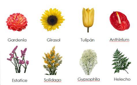 imagenes flores y nombres hermosas im 225 genes de flores con nombres y su origen