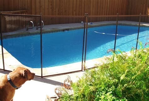 backyard dog pool backyard dog safety childguard diy pool fence gogo papa