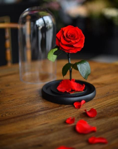 enchanted rose that lasts a year there s a real enchanted rose that can actually last for