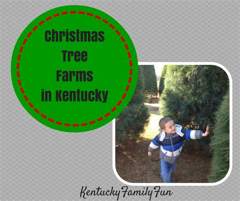 kentucky family fun christmas tree farms in kentucky