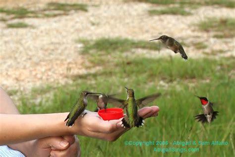 hand feeding hummingbirds by the hummingbird lady