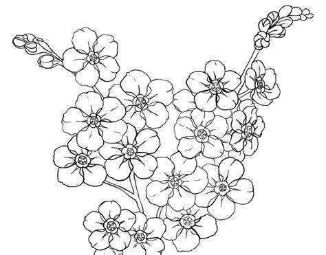 fiori di ciliegio disegno disegno di fiore di ciliegio da colorare acolore