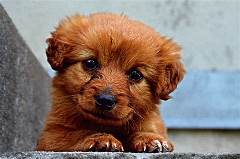 free puppy listings breeds word search play free word search ozzoom planet