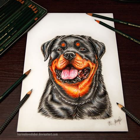 rottweiler drawings rottweiler by karinalovedubai on deviantart
