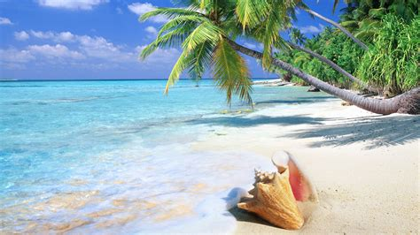 pin beautiful tropical background seascape 1920x1080 509k tropical beach tropical beach shell 1920x1080 16 9