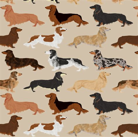 haired weenie haired dachshunds dogs pet pets weenie dogs sausage pets fabric