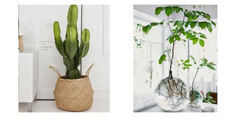 Plantes D Interieur Decoration by Meuble Plante Interieur