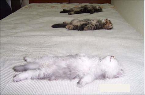 le migliori posizioni a letto esserci le migliori posizioni a letto