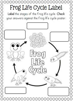1000 images about life cycle ideas on pinterest life