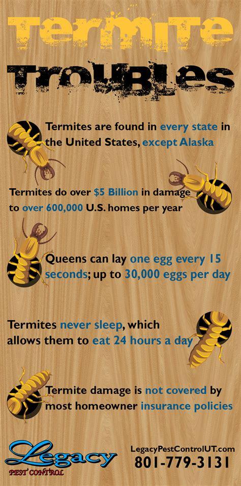 Termite In A House