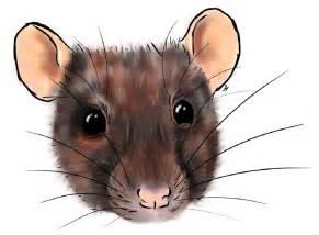 The Rat Race Imdb » Home Design 2017