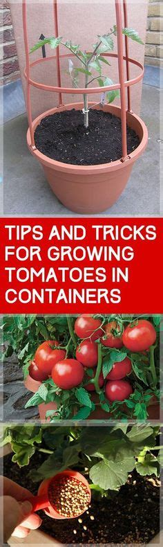 growing peppers in your container vegetable garden