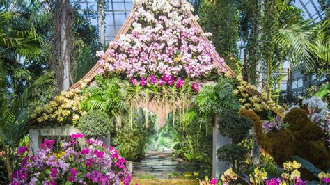 new york botanical garden show tickets discounted tickets to the orchid show at nybg free new