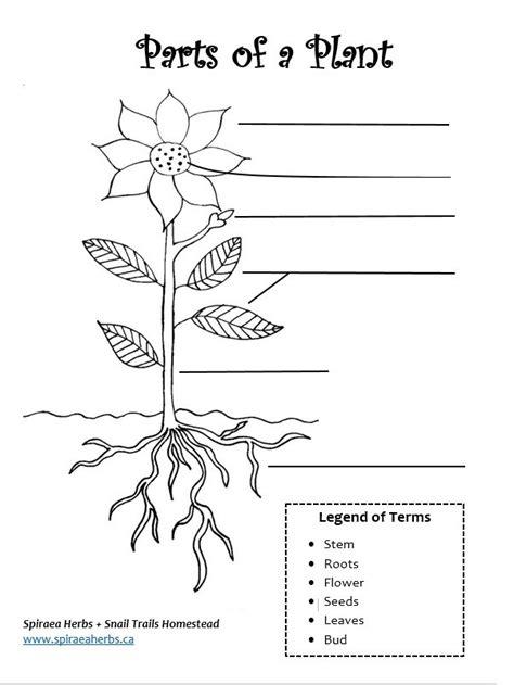 Parts Of A Plant Image