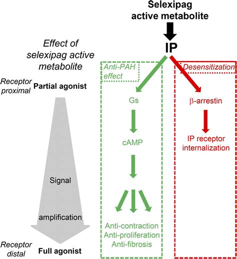 Selexipag Active Metabolite ACT-333679 Displays Strong ... Signal Amplification