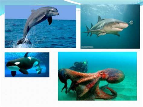 los animales marinos al animales acuaticos