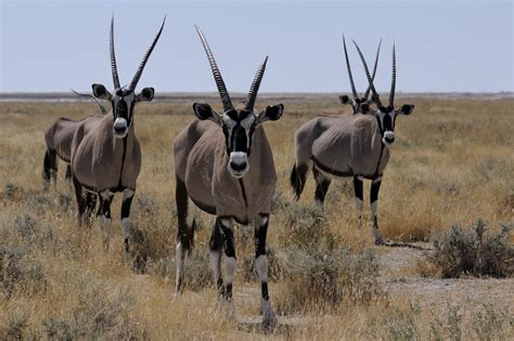 scientists wind   clock  years  study african