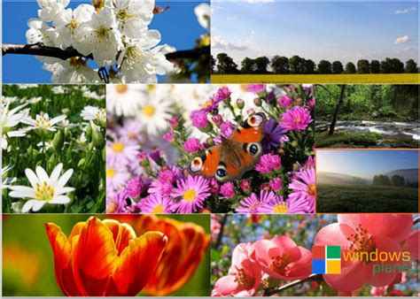 spring themes for windows 10 10 best flowers themes for windows the windows planet