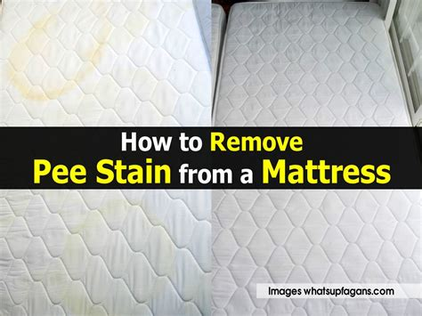 how to remove pee smell from bed how to remove pee smell from bed 28 images how to remove urine stains and odors